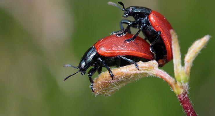 La espermateca de los insectos o las horas de copulación de las serpientes, ¿qué conoces del sexo animal?