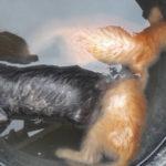 Denuncian el descuartizamiento y ahogamiento de varios gatos de la colonia del IES Universidad Laboral