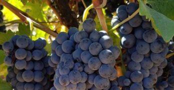El sector del vino se dará cita en Toledo para abordar los retos del cambio climático