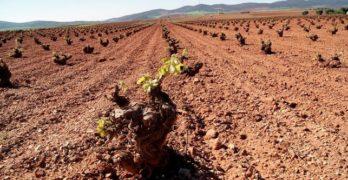 """Castilla-La Mancha iniciará el pago de las ayudas directas de la PAC """"a partir del primer día hábil para hacerlo"""""""