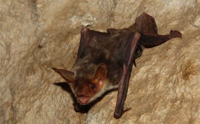 Talavera arranca una campaña para proteger a los murciélagos instalando cinco refugios