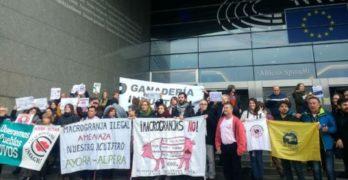 """Las plataformas contra las macrogranjas llevan a Bruselas el """"reguero de incumplimientos"""" en España"""