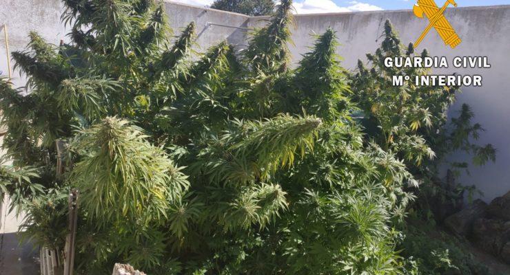 Incautan casi 50 kilos de marihuana en Sonseca y Polán