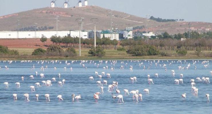 """Las desconocidas lagunas de La Mancha, un """"oasis"""" en medio de una región cada vez más seca"""