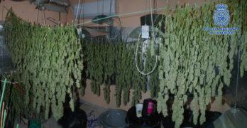Desmantelan un laboratorio de marihuana clandestino en Magán e incautan más de 93 kilos
