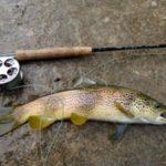 Estas son las claves para la pesca de la trucha común en Castilla-La Mancha a partir de febrero