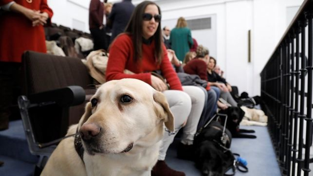 """Aprobada la nueva ley regional que regula la """"plena autonomía"""" de personas con perros de asistencia"""