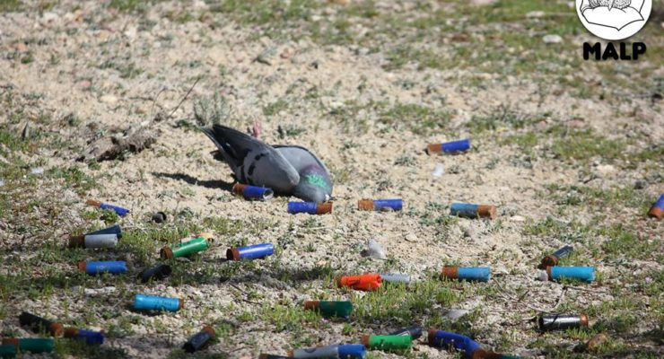 """Cambios en la prohibición del tiro al pichón """"bloquean"""" la futura Ley castellano-manchega de Bienestar Animal"""