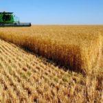 Buena cosecha de cereales en 2018 con ligeras subidas de precios en la producción de invierno