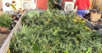 Diez detenidos tras la incautación de 9.000 plantas de marihuana en seis pueblos de Toledo