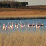 Las fundaciones Global Natura y Enrique Montoliu se alían para proteger la laguna La Redondilla de Villacañas