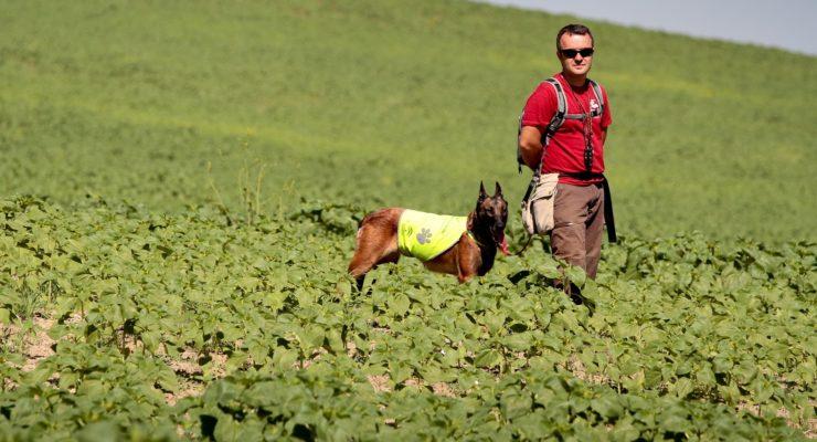 Piden crear una unidad canina contra el veneno en Toledo para proteger a aves amenazadas