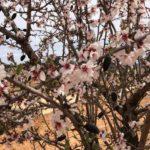 Los agricultores temen que las altas temperaturas comprometan cultivos como almendro, olivar, viñedo y frutales