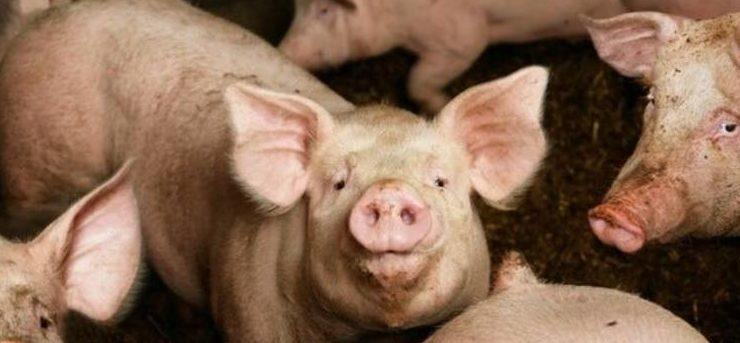 """""""España es el primer país de Europa en porcino y no se asumen los costes ambientales"""""""