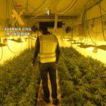 Desmantelan un laboratorio con más de 2.000 plantas de marihuana en Montearagón