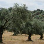 """""""La disminución de biodiversidad en el olivar supone aumentar costes por plagas"""""""