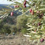 Cuidar el medio ambiente: ¿una cuestión de aceites?