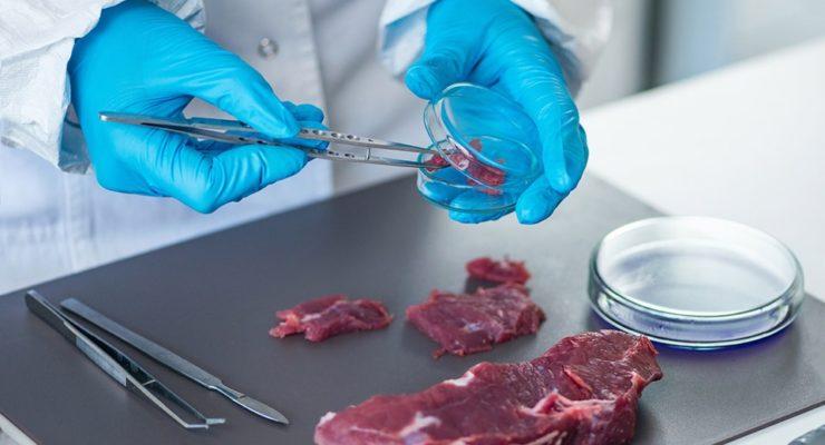 Castilla-La Mancha es la región que más carne silvestre produce