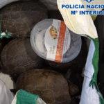 Sorprenden a un hombre en Talavera con 19 tortugas de interés especial en una maleta