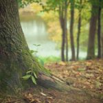 Los Yébenes apuesta por la naturaleza con la II edición de las Jornadas de Biodiversidad y Medio Ambiente