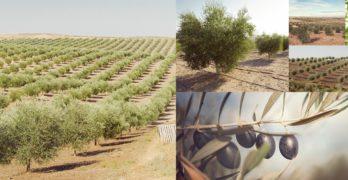Ranas o perdices entre olivares: la almazara de La Guardia que apuesta por la biodiversidad