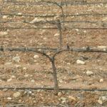 Los agricultores esperan más lluvias para salvar las cosechas de herbáceos y dar oxígeno a los leñosos