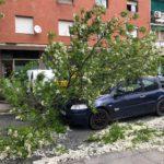 Un conductor resulta ileso tras caer sobre su coche una rama de cuatro metros