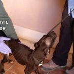 Investigan a un hombre en Ocaña como presunto autor de la muerte de un perro y abandono de otros tres