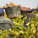 Ajo, melón, sandía y vendimia: así se vigilan las condiciones de los temporeros en las próximas campañas agrícolas