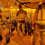 Desmantelan un sótano con más de 1.720 plantas de marihuana de un chalé abandonado en Pepino