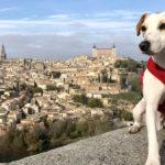 """Pipper, el perro turista, termina su vuelta a España en Toledo, donde solo """"el 5%"""" de hoteles admiten mascotas"""