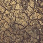 Las altas temperaturas y la ausencia de lluvia ponen en alerta a Administración y agricultores