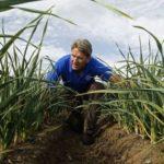 Baja el paro en 592 personas en la provincia gracias a la actividad del sector agrario