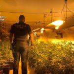 Detenidas tres personas en Carmena por un presunto delito de cultivo de marihuana