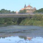 El Ayuntamiento de Talavera opta por la fumigación ante las plagas de mosquitos