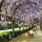 Denuncian impagos de la empresa encargada del mantenimiento de los parques y jardines de Toledo