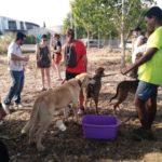 Adoptarán a alrededor de una docena de los perros evacuados por el incendio de Toledo