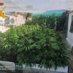 Nuevas detenciones por cultivo de marihuana
