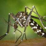 Cambio climático, el cada vez más largo verano del mosquito