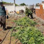 Desmantelada una de las mayores plantaciones exteriores de marihuana en la provincia