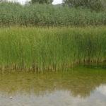 Los nitratos de origen agrario, un problema en la contaminación de las aguas que también llega a Toledo