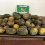 Tres investigados por robar 20.000 kilos de melones en Tembleque mientras uno de ellos trabajaba en la plantación
