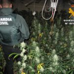Desmantelan tres plantaciones de marihuana en Mora, Madridejos y Pantoja
