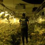 Desmantelan un cultivo interior de más de 4.600 plantas de marihuana en un chalé de Montesión