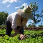 """Ya puedes formarte en agroecología para """"retroalimentar"""" tu entorno"""