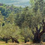 Los regantes de Mora urgen al Ministerio a poner en marcha las 214 hectáreas comprometidas