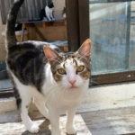"""Protectoras de animales de Toledo urgen a tomar medidas para controlar """"la superpoblación de gatos"""""""