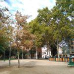 Talavera plantará más de 400 árboles y retirará ejemplares enfermos o con riesgo de caída