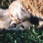 """La futura Ley de Bienestar Animal, """"desbloqueada"""" y lista para su aprobación"""