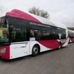 Autobuses gratis, se suprime la línea 14 y paseos de hasta 300 metros con el perro en Toledo